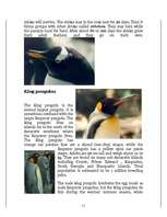 african penguin research paper