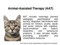 Presentations 'Animal-Assisted Therapy', 1.